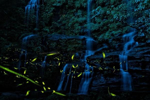 童话般夜景,太美了!天台山景区首波萤火虫飞舞期来了