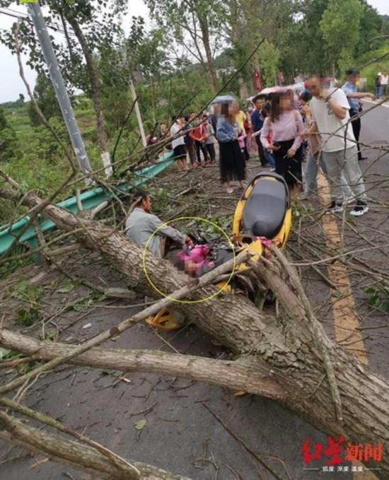 断裂部位朽烂!路边行道树突然倒下砸中7岁女童致颅骨骨折