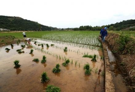 眼见江水流过却无法灌溉农田 提灌站让中江天梯村栽上水稻